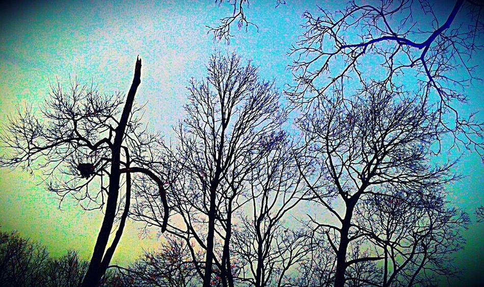 At The Park Birds Nest Colorful Getting In Touch Beautiful Nature Nature Harmony Winter Just Looking Up...