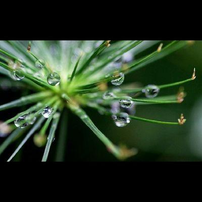 Belajar Macro. Macro Nature Photography INDONESIA