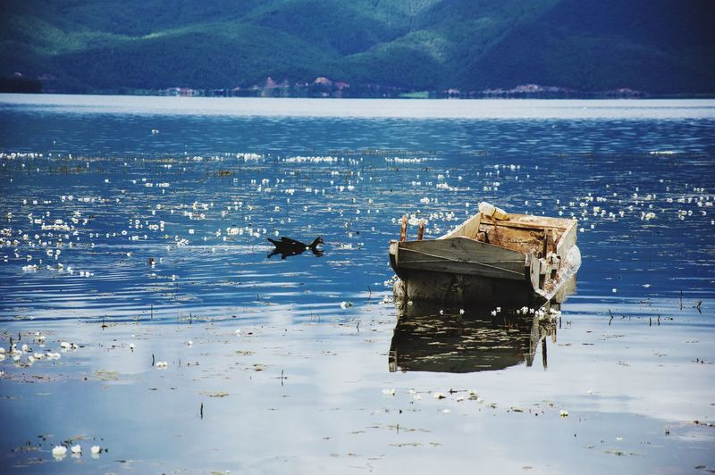 Boat Duck Swimming HaveFun Have A Rest Blue Pure Travel Yunnan