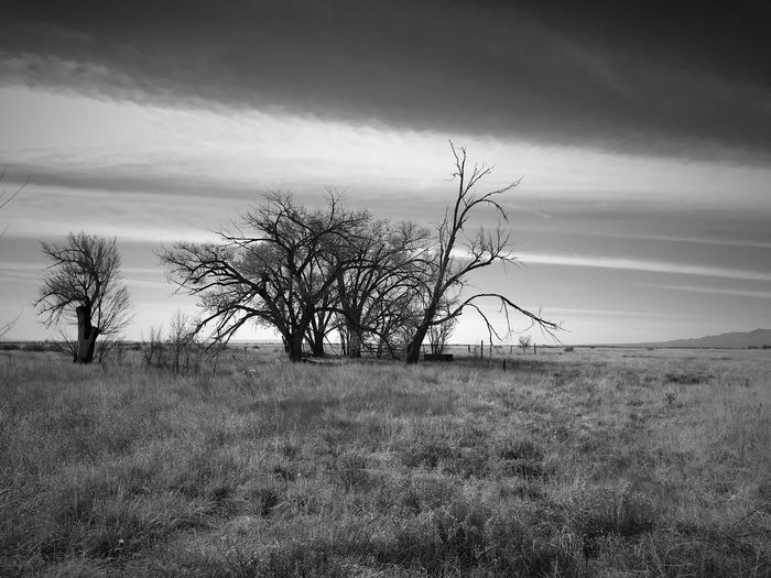 """Wasteland"" Trees stripped bare by Winter's ravage stand alone on the open grasslands of Central New Mexico. Grasslands New Mexico Photography New Mexico Bare Tree Blackandwhite Photography Black And White Blackandwhite Landscape Bare Tree Tree Nature Grass"