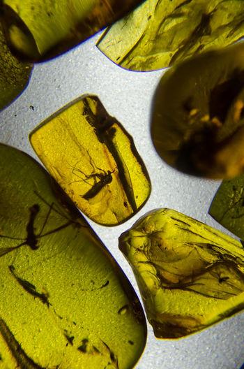 Bernstein mit Einschluss - Mücke. Bernstein Mücke Yellow Resin Resin Drop Light And Shadow Transparent Full Frame Backgrounds Close-up Insect
