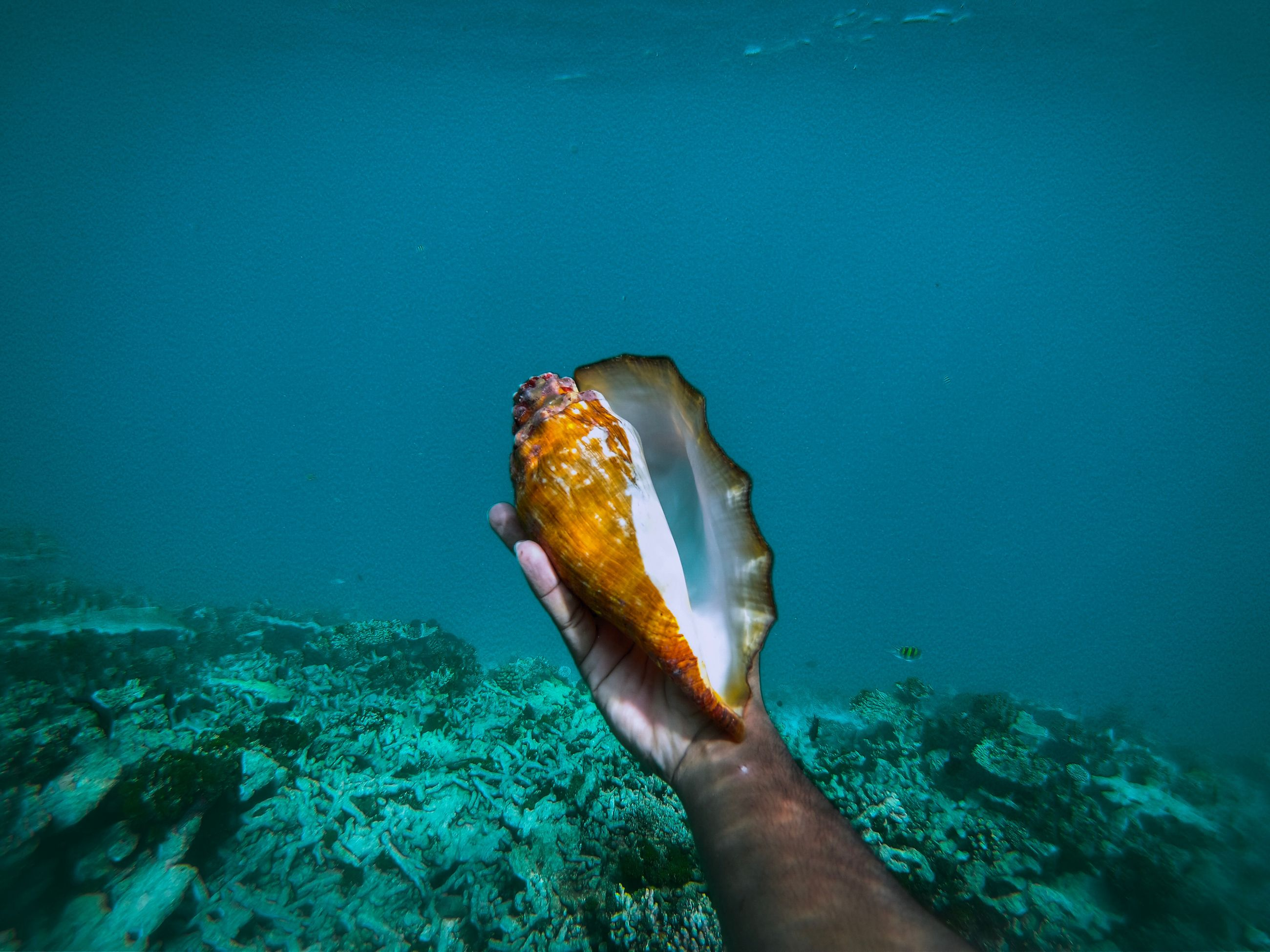 sea, water, underwater, one animal, animals in the wild, animal themes, animal, animal wildlife, one person, undersea, sea life, nature, human hand, marine, human body part, blue, swimming, hand, day, outdoors, finger, turquoise colored