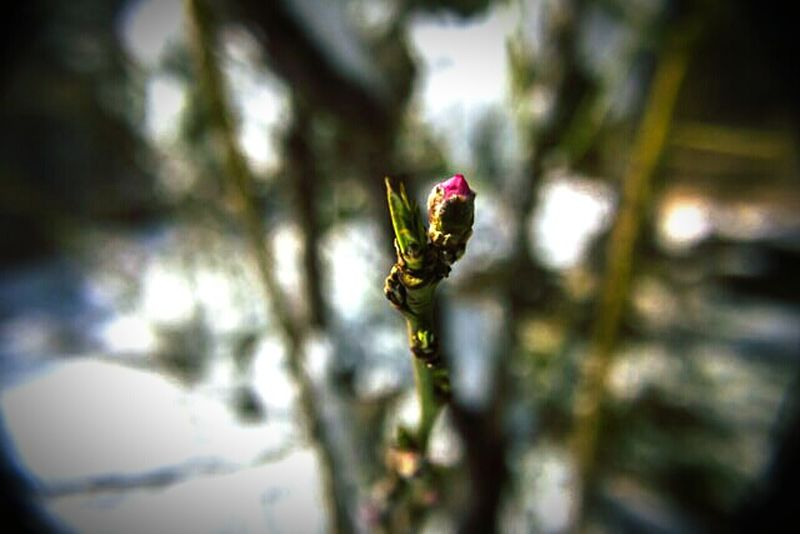 """""""Pink"""" (2016) Budding Tree Spring Is Coming  Denver, Co Outdoor Photography"""