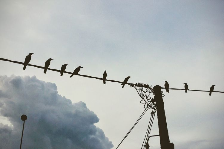 Low Angle View Sky No People Bird Connection Cloud - Sky Animals In The Wild Animal Themes Outdoors Day Large Group Of Animals Technology Nature Telephone Line Perching