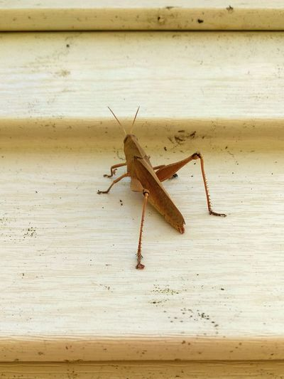 Grasshopper Ninja Knee High To A Grasshopper Insect Nature Up The Wall Animals In The Wild Blend In  Time To Shave Your Legs