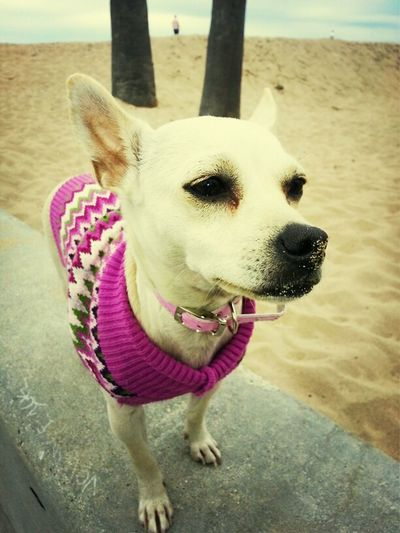 Sasha Having Fun At The Beach