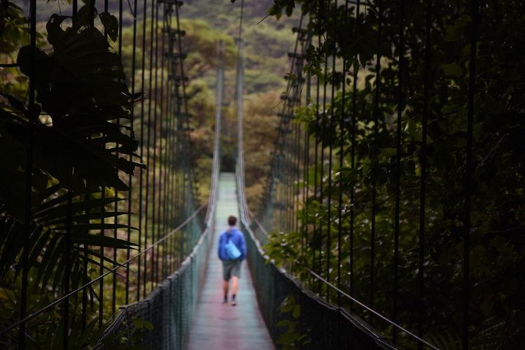 Cloud Forest Costa Rica Hanging Bridge Outdoors Rain Rain Forest The Great Outdoors - 2016 EyeEm Awards