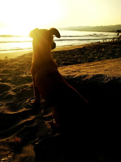 Sunrise on a deserted Beach with a stray Dog . Friendship Summer View Sea Light Holiday POV Summer Dogs The Moment - 2015 EyeEm Awards My Favorite Photo The Essence Of Summer 43 Golden Moments Live For The Story Sommergefühle Pet Portraits