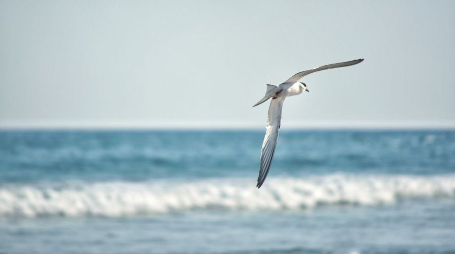 Blue Cold Flying High Bird Beach Travel Nature