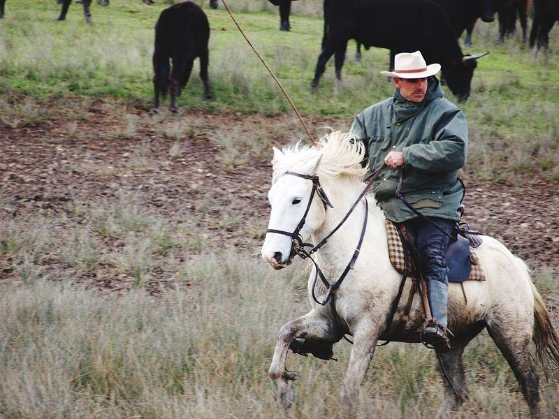 Manade en camargue Naturelovers Nature_collection Nature Horse Horse Photography  Horse Life Cheval Blanc Cheval Taureau Taurus