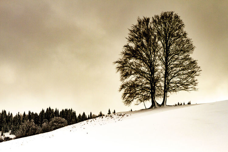 Tree Winter Snow Cold Temperature Plant Sky Beauty In Nature Tranquility Tranquil Scene Environment Scenics - Nature No People Land Nature Landscape Bare Tree Field Non-urban Scene Covering Outdoors Cold Isolated My Best Photo