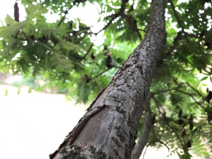Tree Tree Trunk Nature Growth Outdoors No People Focus On Foreground Day Close-up Beauty In Nature