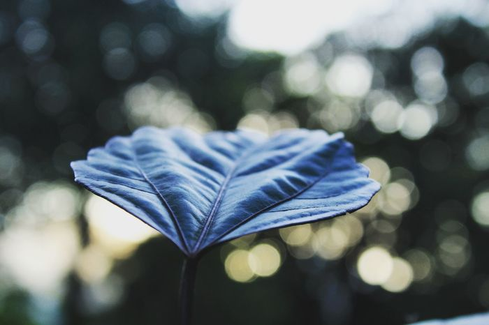 Green life .morning due Leaf Nature Macro Springtime Close-up Beauty In Nature Selective Focus Check This Out EyeEm Best Shots Tour Trees Nature_collection Nature Morning Due Close-up Leaf Dry Focus On Foreground Selective Focus Fragility Leaf Vein Change Blue Macro