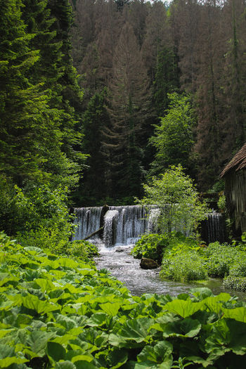 Plants and trees by waterfall in forest