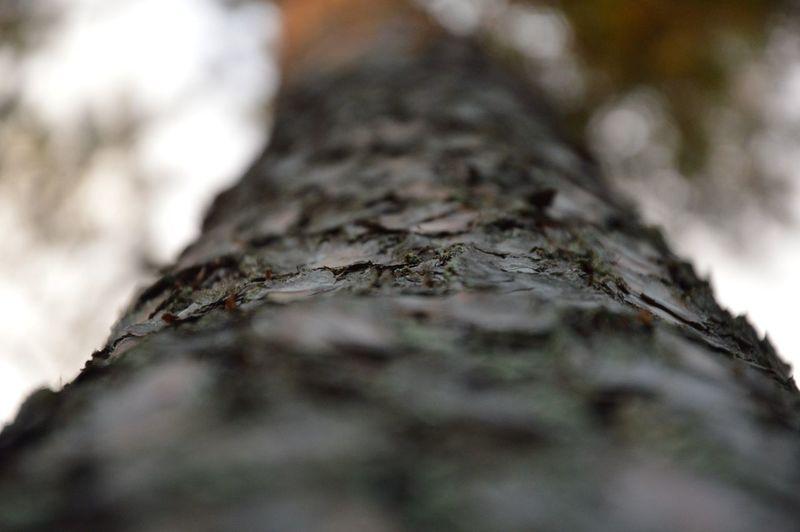 Nature Trees Outside Beautiful Bark
