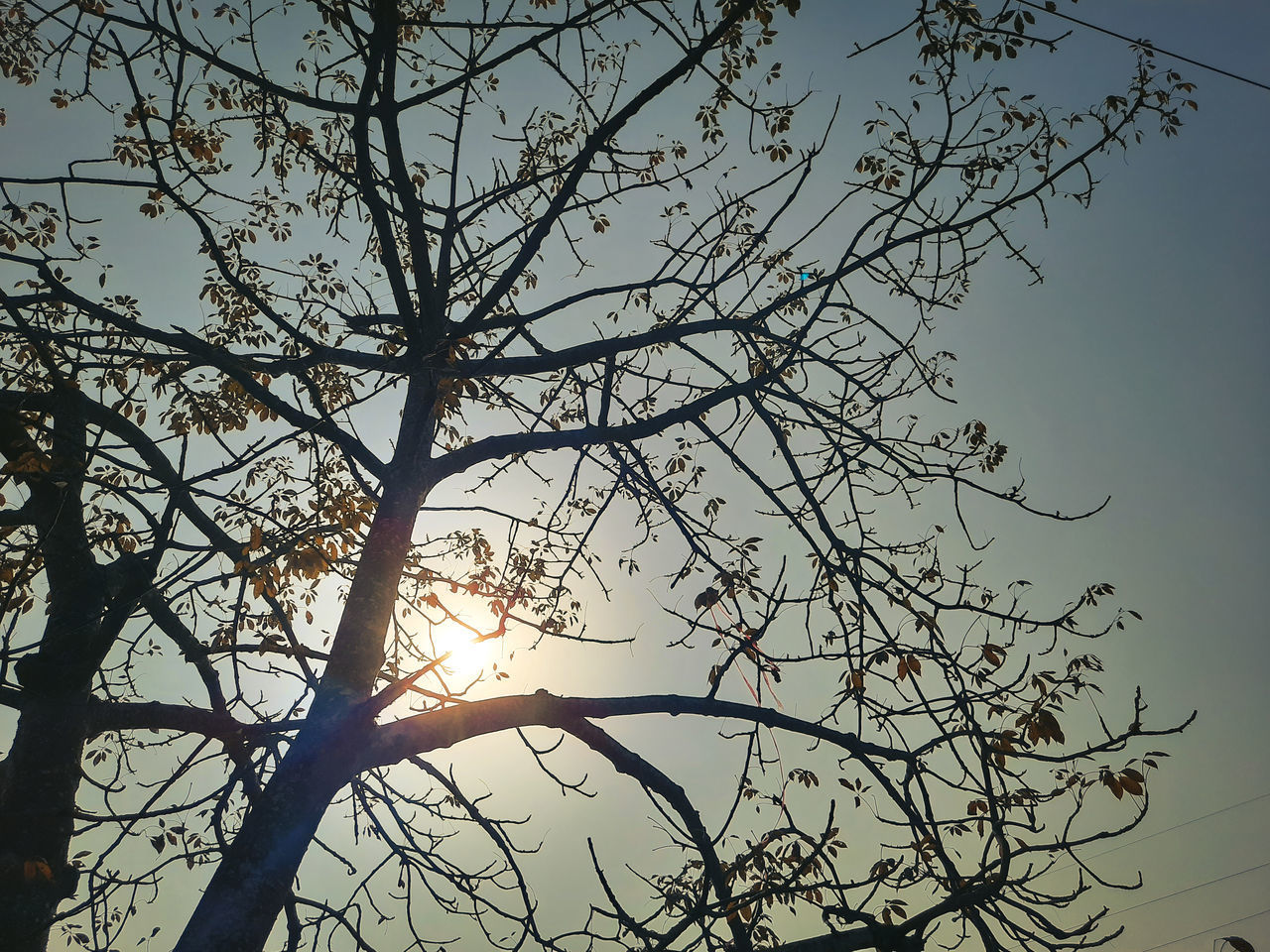 LOW ANGLE VIEW OF SUNLIGHT STREAMING THROUGH SILHOUETTE TREE