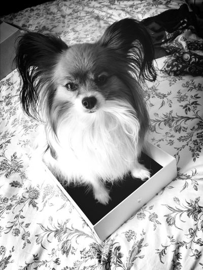 Apple iPooch, fresh out of the box :) I Love My Dog Furry Friends Happiness In A Box Four Legs And A Tail