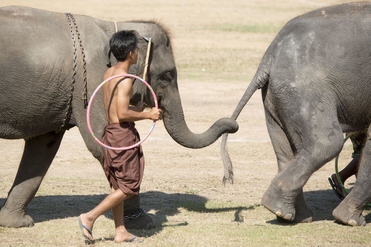 Man holding ring while walking with elephants on ground