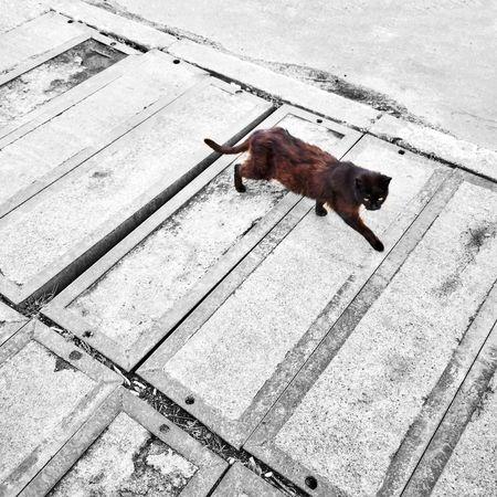 Vintage Fenile Tracks Gdynia 28 March 2015 IPSPatterns Cat Colorsplash Bnwbutnot IPSMotion The Photojournalist - 2015 EyeEm Awards