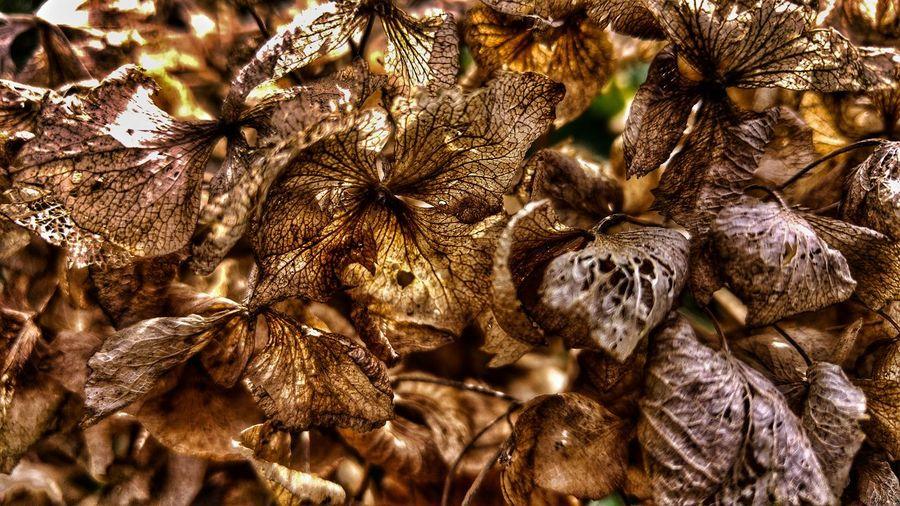 Full Frame Shot Of Wilted Flowers