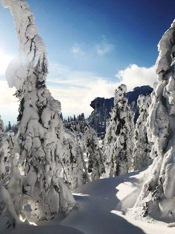 Snow Winter Wonderland Bayerischer Wald Sky Nature Cloud - Sky Sunlight Day No People Tranquil Scene Cold Temperature Snow
