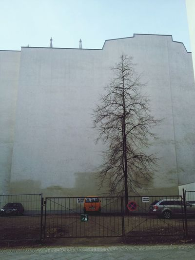 Berlin Berlin Street Photography Berlin Mitte Citystreets City Tree Alone Tree Nature Vs City