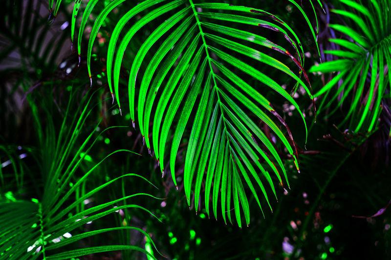 Close-up of palm tree at night