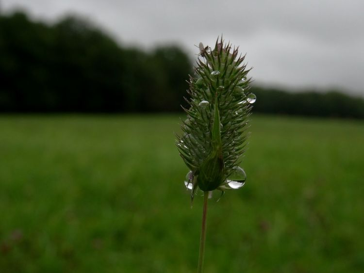 Macro Photography Nature Waterdrop Rain Rainy Day Summer Green Country Grass
