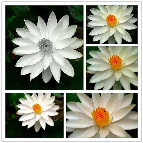 สิ่งใดๆ สวยหรือไม่อยู่ที่ใจคนมอง ใจคนทรามของสวยงามหางามไม่ ใจคนงามแม้นของทรามก็งามใจ
