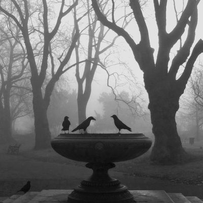 EyeEmNewHere Kennington Kennington Park London Animal Themes Animals In The Wild Bare Tree Beauty In Nature Bird Branch Crows Day Fog Mist Nature No People Outdoors Ravens Tree