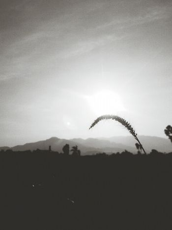 Black And White Lightness Taking Photos