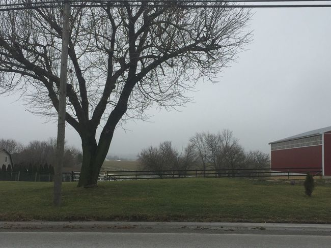 Amish, winter, Tree, beauty, no people, farms, country living Amish lifestyle. Countyside