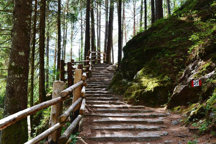 Wanderlust Alps Alps Italy Alpen Hiking Hikingadventures Beauty In Nature Südtirol Italy Nature Europe Dolomiten Dolomites Dolomites, Italy Tree Forest Bamboo - Plant Tree Trunk Bamboo Grove Steps Footbridge Railing Steps And Staircases Sky Hand Rail Stairway Stairs Staircase Walkway Pathway Stay Out