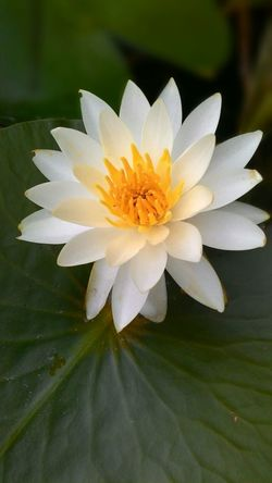 Lotus Japón Taking Photos UltimateJapan