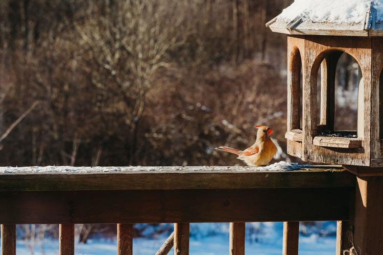 Close-up of bird perching on wooden deck