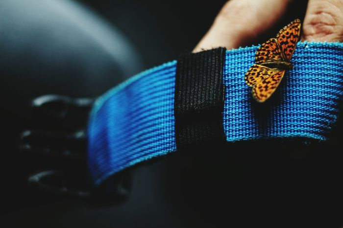 Blue Selective Focus Part Of Close-up Midsection The Great Outdoors - 2016 EyeEm Awards EyeEm 2016 Nature Macro Butterfly Macro Butterflys