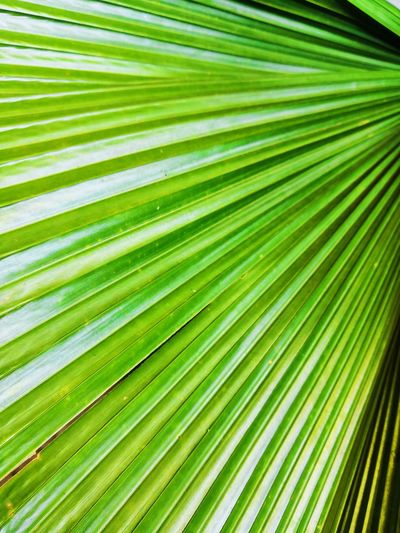 Tree Palm Tree Frond Backgrounds Leaf Full Frame Complexity Palm Leaf Close-up Green Color Natural Pattern Blooming In Bloom Focus Plant Life Spider Web Pollen Bark Fern Botany Iris - Plant Butterfly - Insect Dahlia Stamen Blossom Flower Head Apple Blossom Gazania Leaf Vein Petal