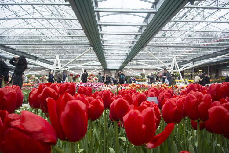 Group of people in greenhouse
