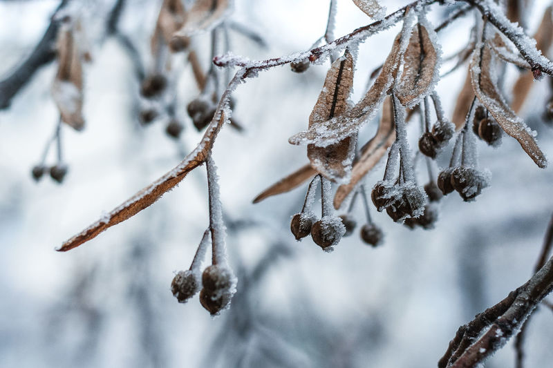 EyeEm Best Shots EyeEm Nature Lover Frozen Frozen Leaves Frozen Nature Ice Ice On Leavea It's Cold Outside My Best Photo 2016 My Winter Favorites Snow Winter Winter Leaves Winter Trees