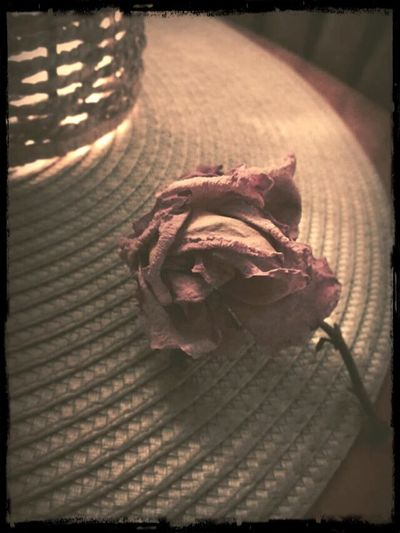 Rose🌹 The Withering Rose Pink Petals Old School Romance