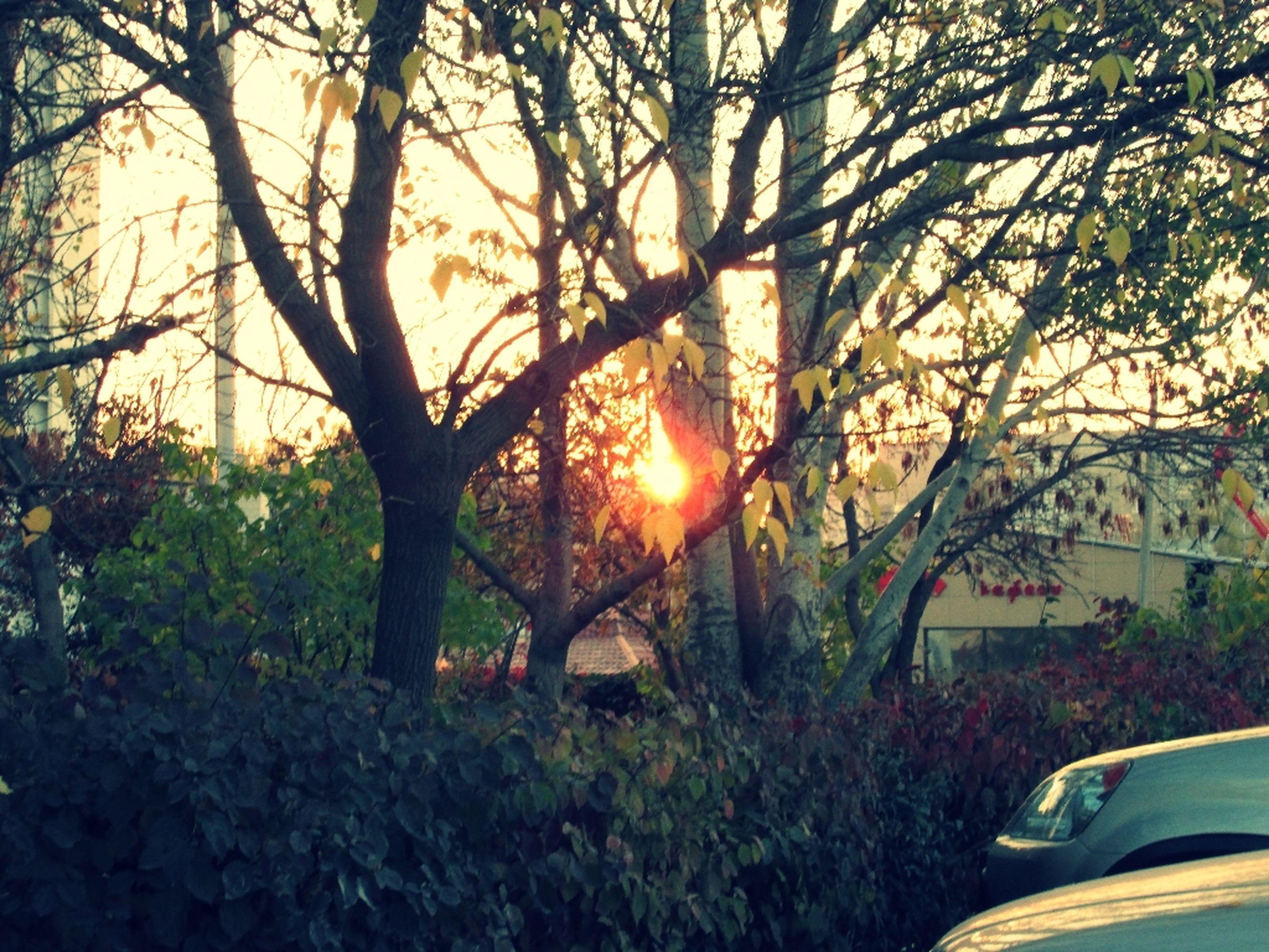 sunset, sun, tree, sunlight, tranquility, growth, beauty in nature, sunbeam, nature, scenics, orange color, tranquil scene, lens flare, branch, plant, sky, tree trunk, back lit, idyllic, landscape
