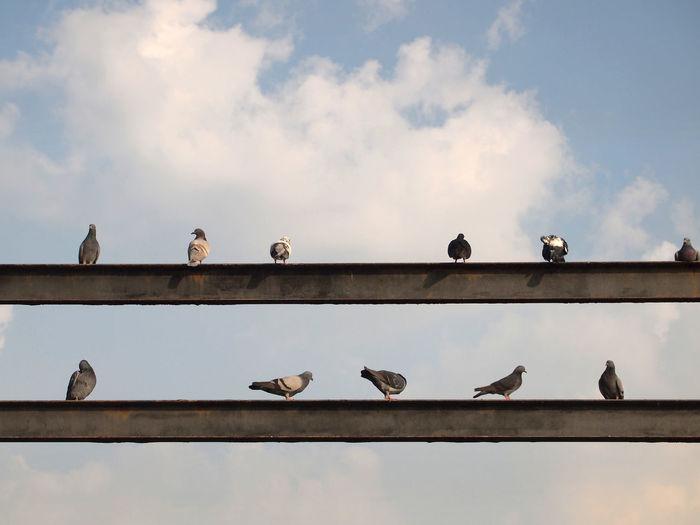 Birds perching on railing against sky