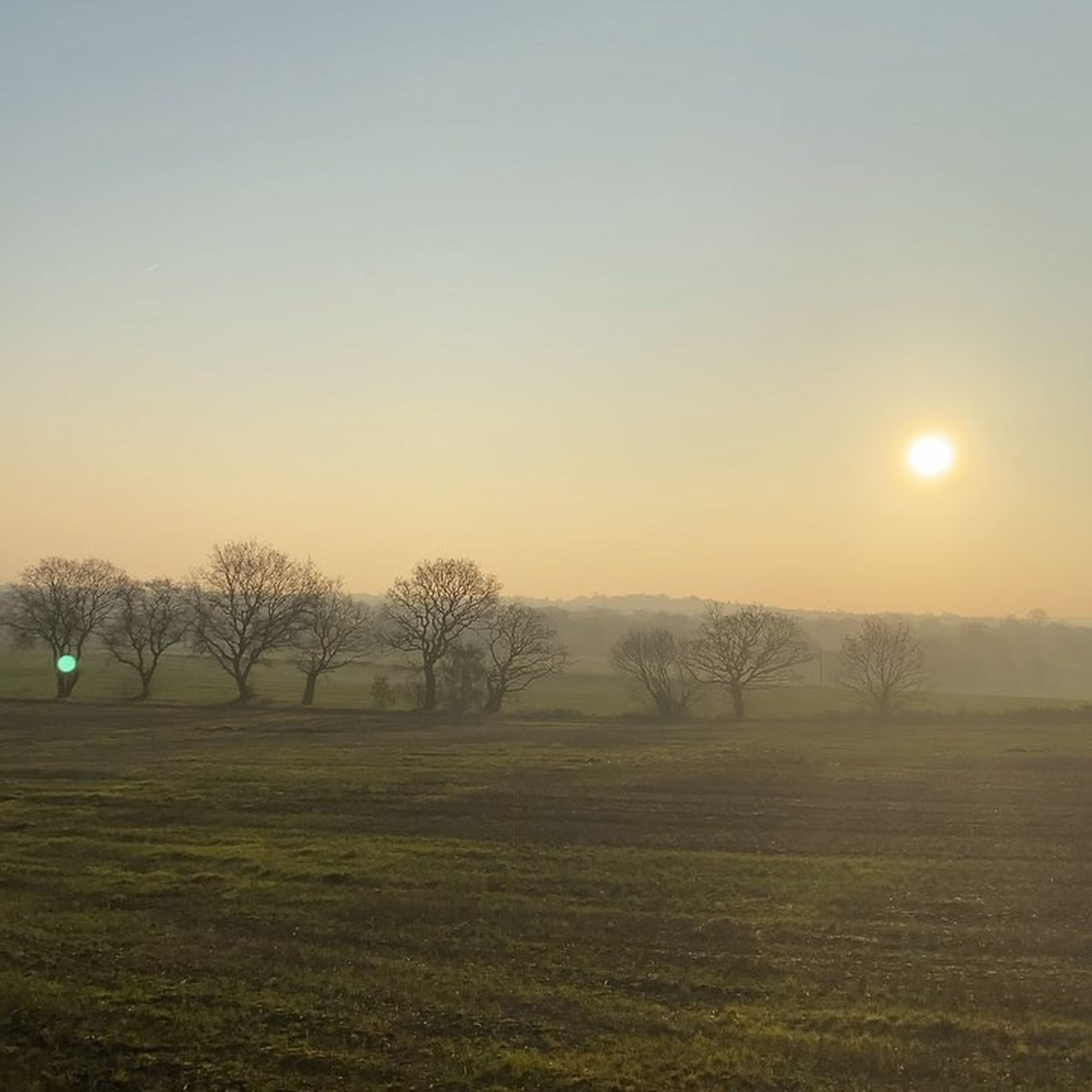 tree, sky, plant, tranquility, scenics - nature, beauty in nature, landscape, environment, tranquil scene, field, sunset, nature, no people, sun, grass, land, clear sky, non-urban scene, bare tree, outdoors