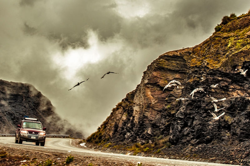 Birds flying over mountain against sky
