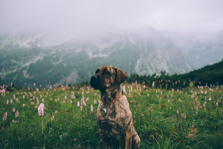 View of dog on field against mountain