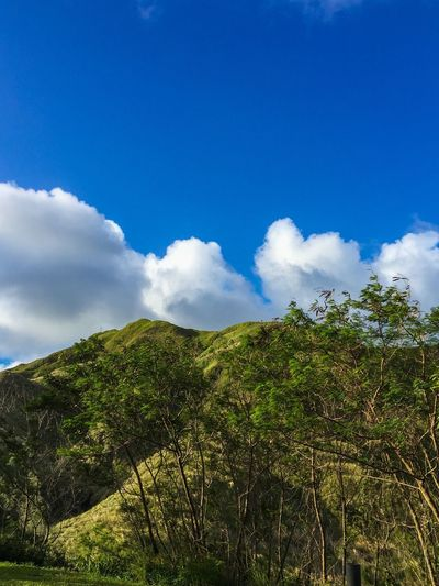 Blue Wave Clouds And Sky Blue Sky Blue White Clouds Mountains Trees Green Green Green!  Hanging Out Check This Out The KIOMI Collection EyeEm Guam Landscape Landscape_Collection Landscape_photography The Great Outdoors With Adobe The Great Outdoors - 2016 EyeEm Awards