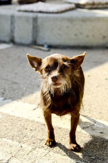 Portrait of puppy standing on sidewalk