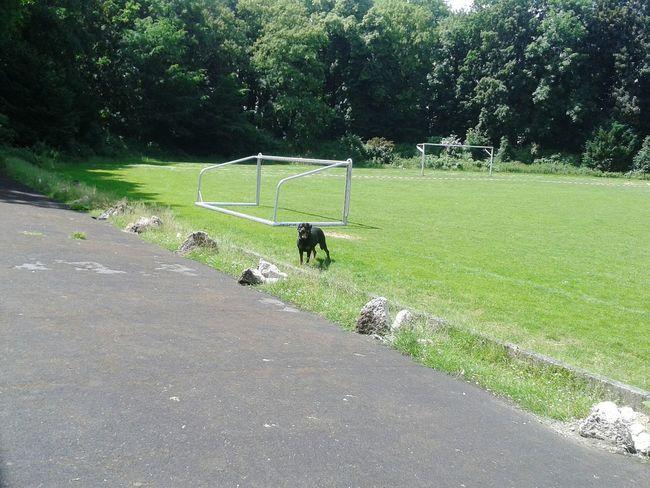 EyeEm Dog Lover Fußballfeld Playing With My Dog Dogslife Hundefotografie Taking Photos Spazierenmithund Sportplatz From My Point Of View