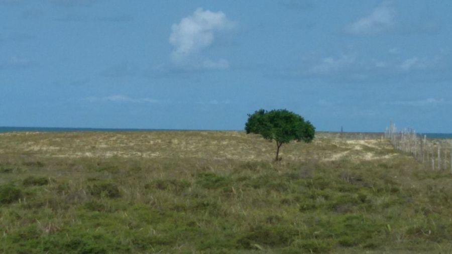 Grass Landscape Field Cloud - Sky Sky Nature Day No People Outdoors Agriculture Tree Blue Scenics Beach Beachphotography Bahia Brazil Litoral Norte Brasil ♥