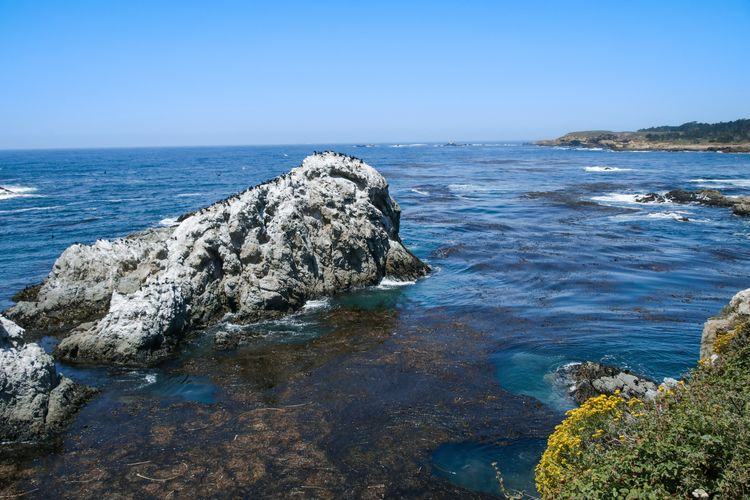 salty air Nature California Rocky Warm Elevated View Adventure Exploring Lost Wanderlust Water Sea Clear Sky Beach UnderSea Blue Rock - Object Sky Horizon Over Water Wave Coast Coastline Coastal Feature Ocean Shore Seascape Seashore Crashing Rocky Coastline Tide Surf